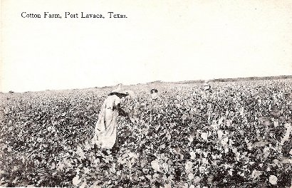Cotton Farm - Port Lavaca, Texas, 1908