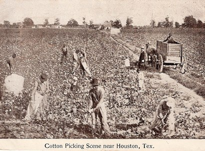 Cotton Picking Scene near Houston, Texas