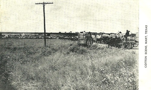 Mart TX - Cotton Scene