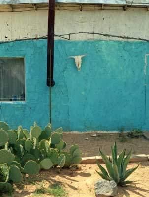 Valentine TX Skull U0026 Cactus