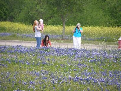 Bluebonnets in Brenham  Texas
