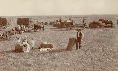 El Campo Texas Hay