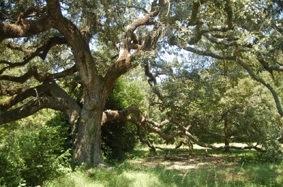 San Jacinto County, Texas - Coldspring Hanging Tree